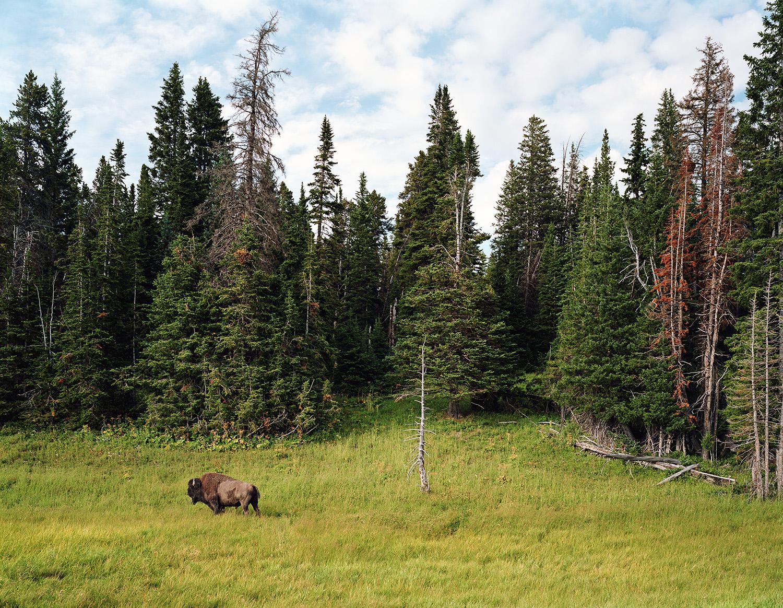 Yellowstone Park, Wyoming