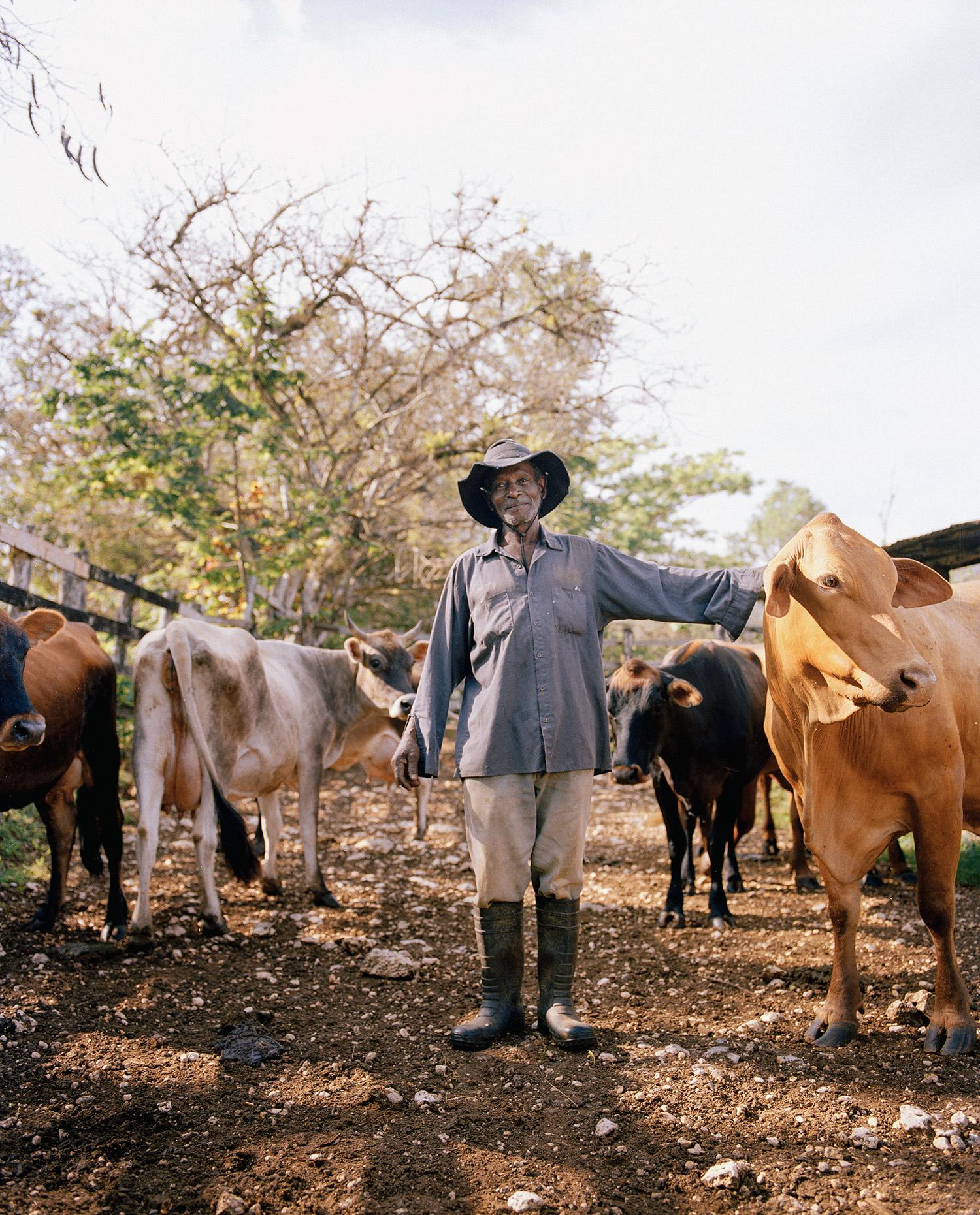 WSJ_Jamaica_CowTender.jpg