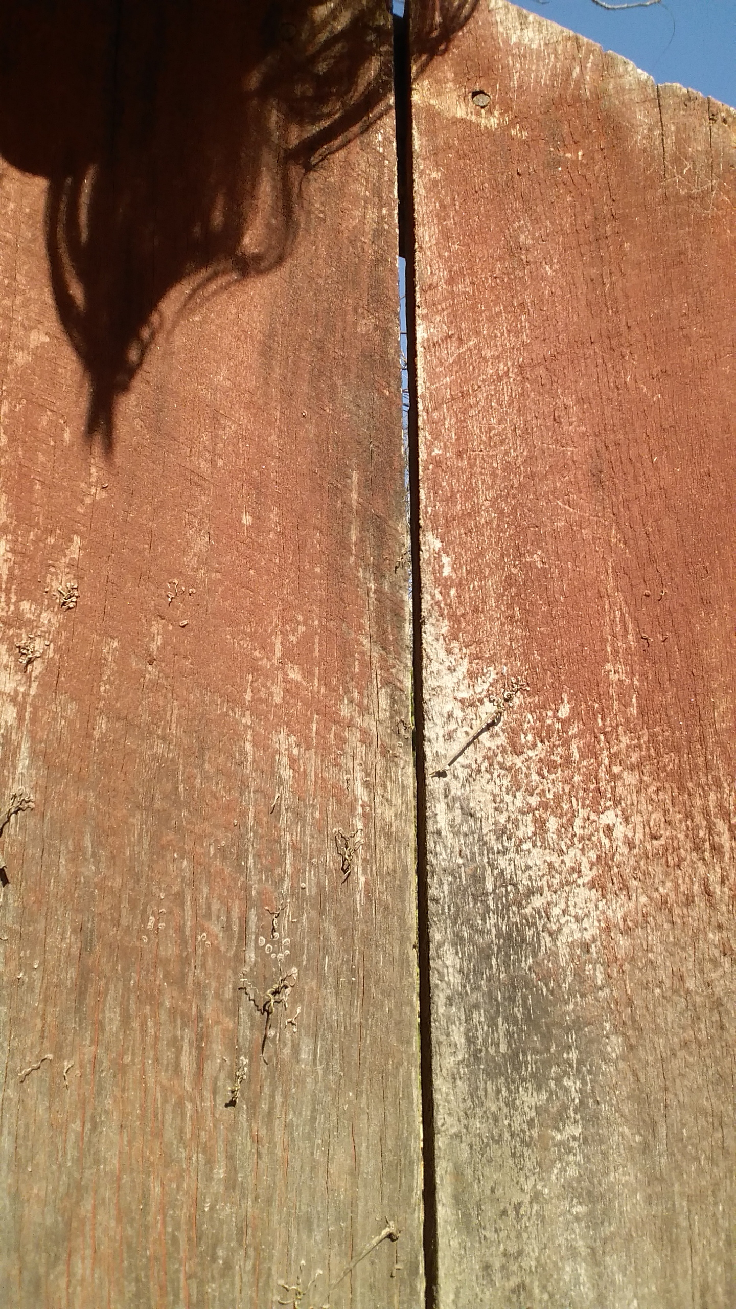barn siding with red hue.jpg