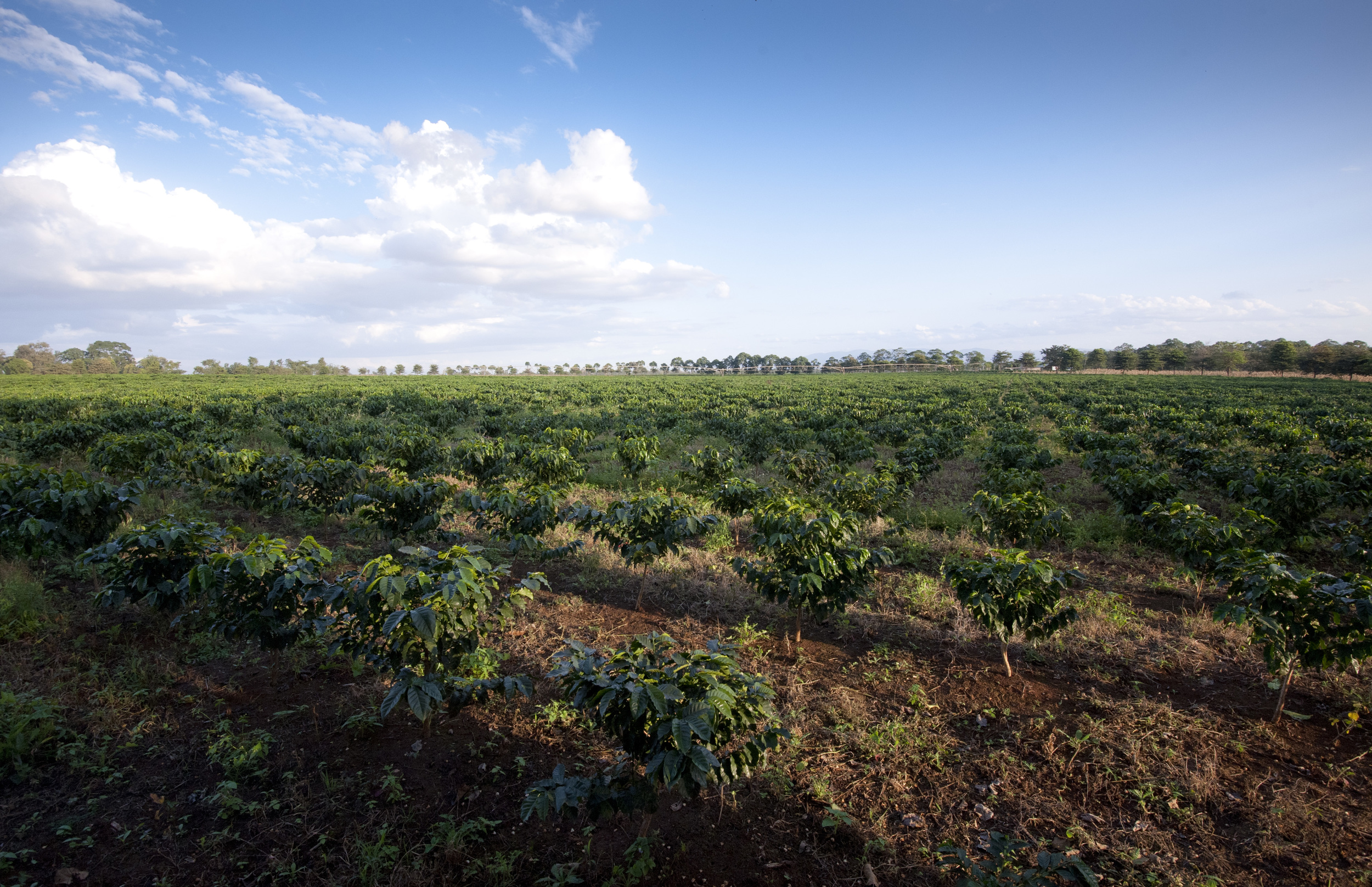 k farm 2.jpg