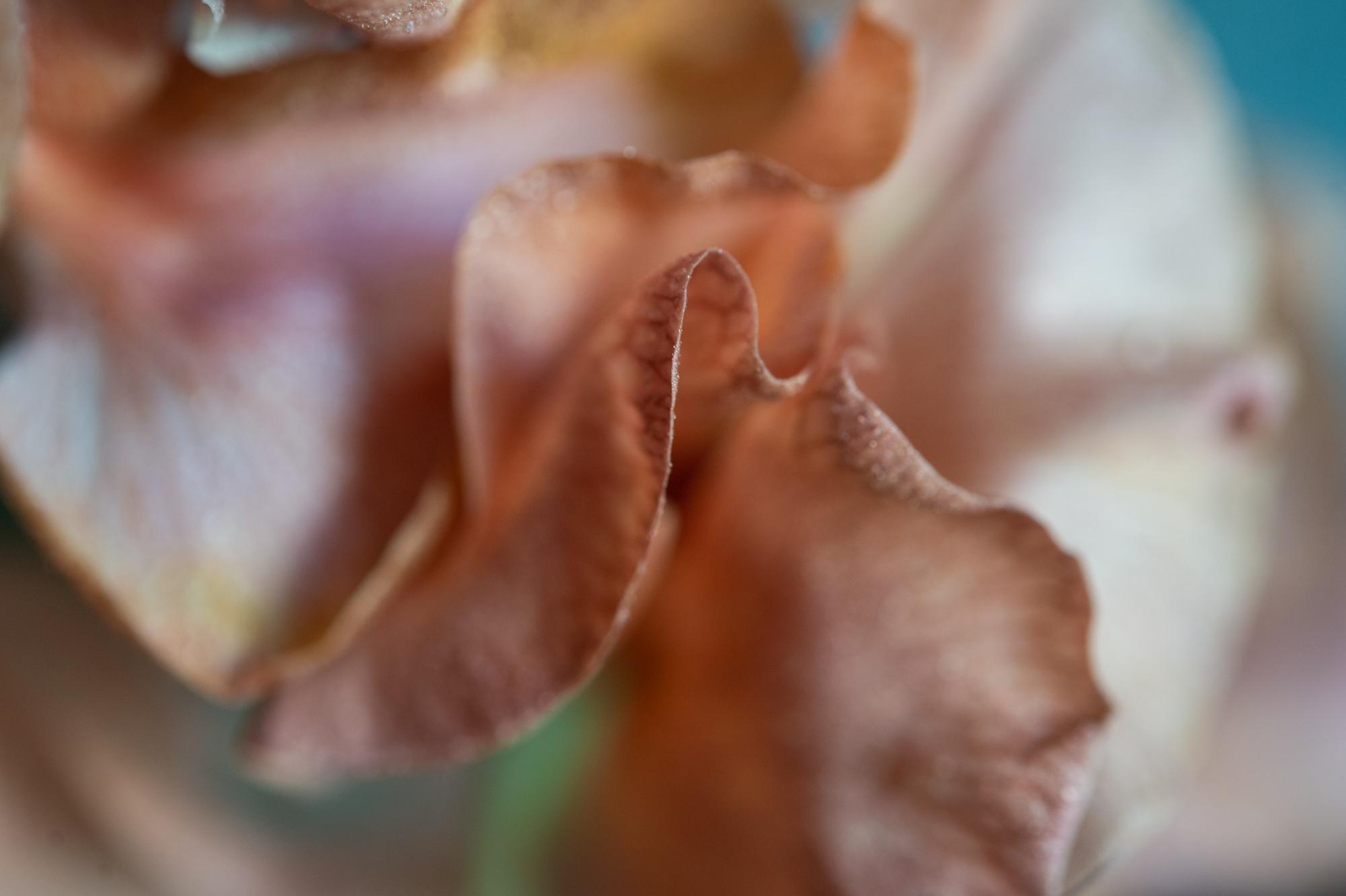 006_flowerpedia_120_flowerpedia1__SP45120.jpg