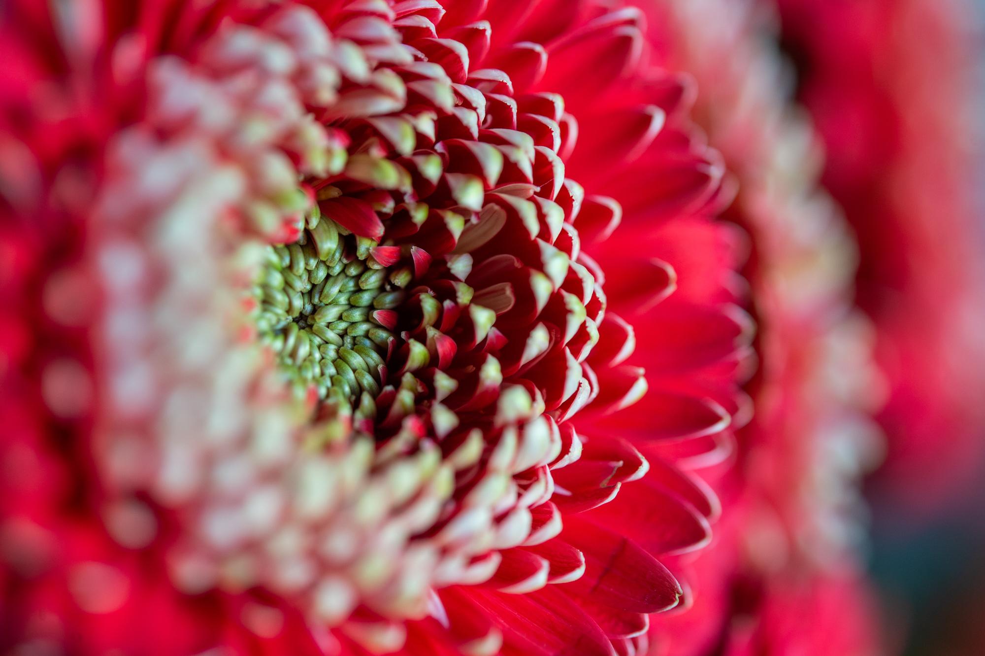 012_flowerpedia_149_flowerpedia1__SP45113.jpg