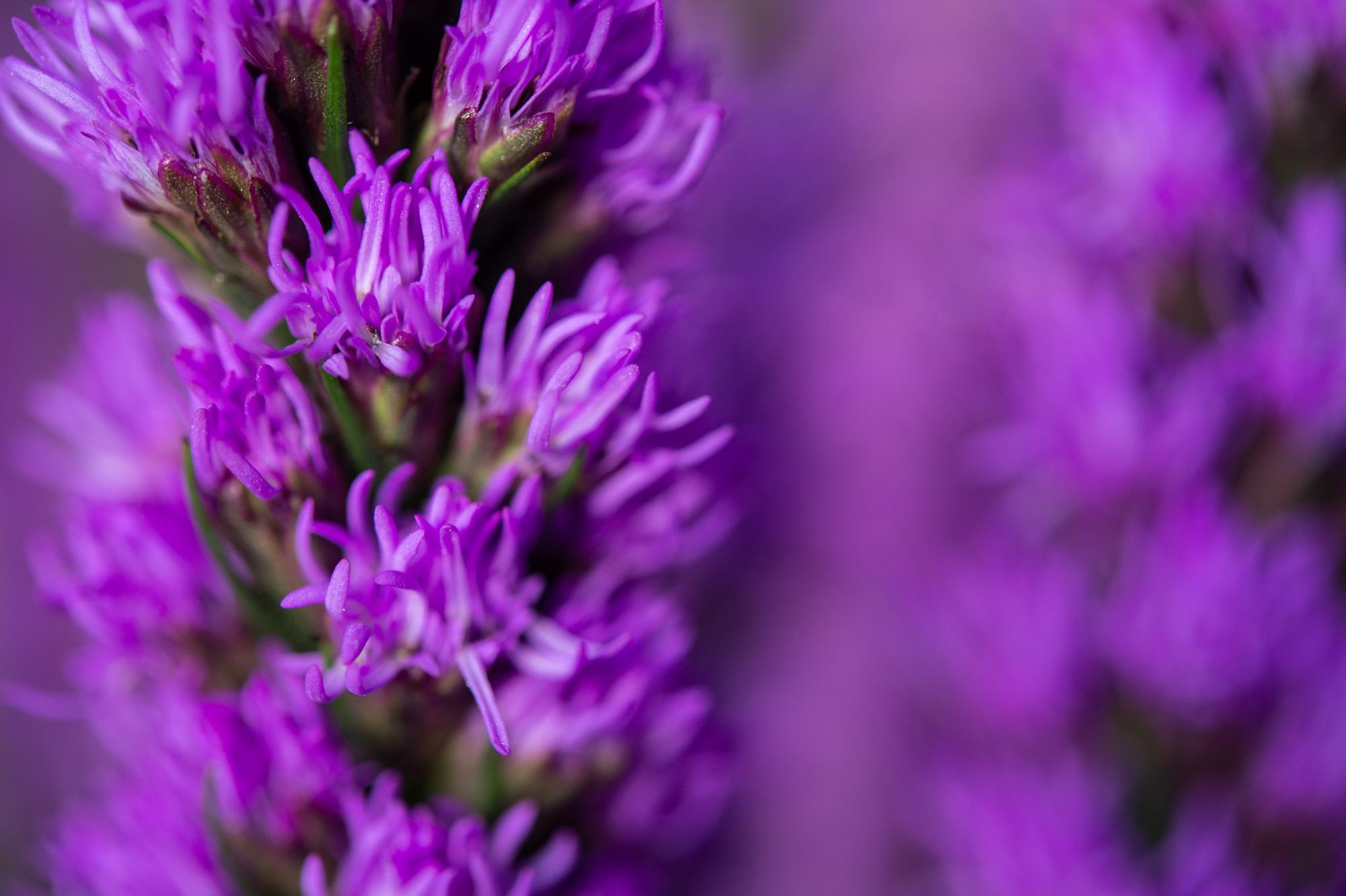 017_flowerpedia_005_flowerpedia1__SP45236.jpg