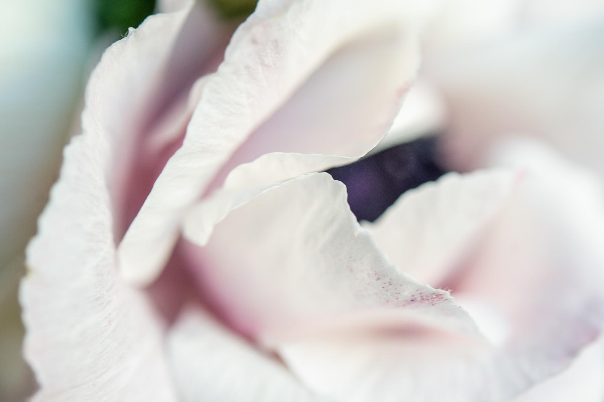 030_flowerpedia_049_flowerpedia1__SP45394.jpg