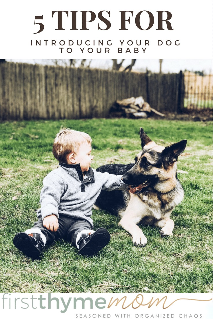 How to introduce your big dog to your new baby. Bringing home baby to your dog.