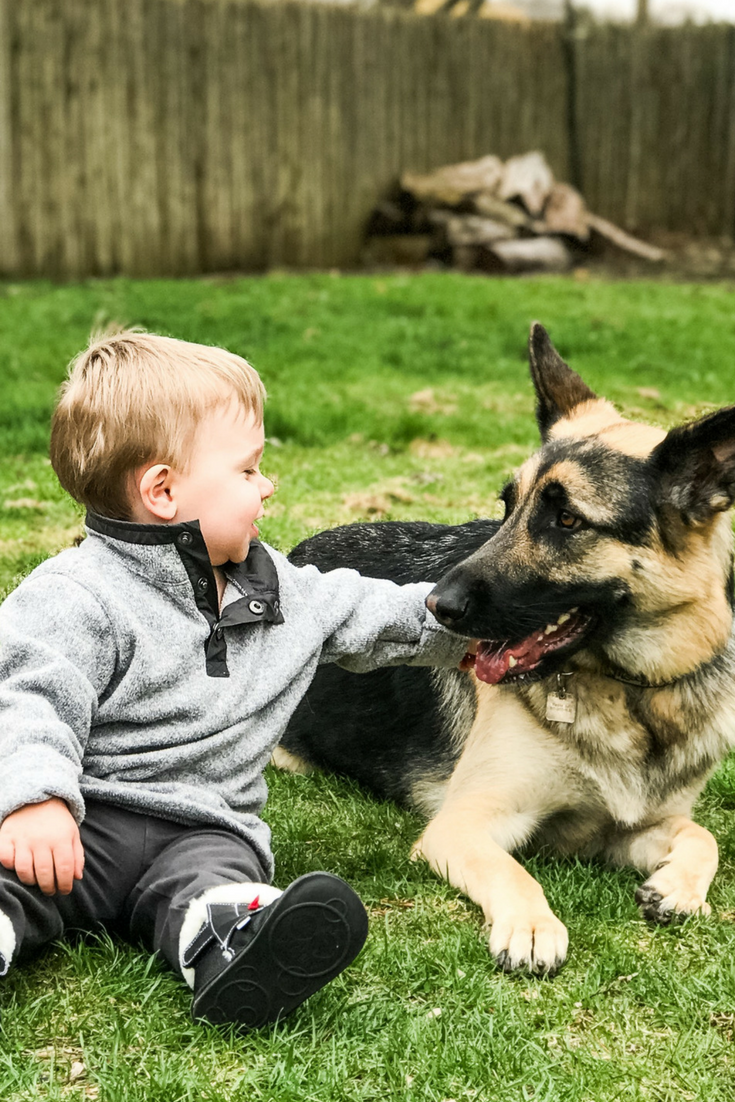 5 Tips for Introducing Your Pet to Your New Baby. Pets and Babies, How to make your pet comfortable around your new baby.