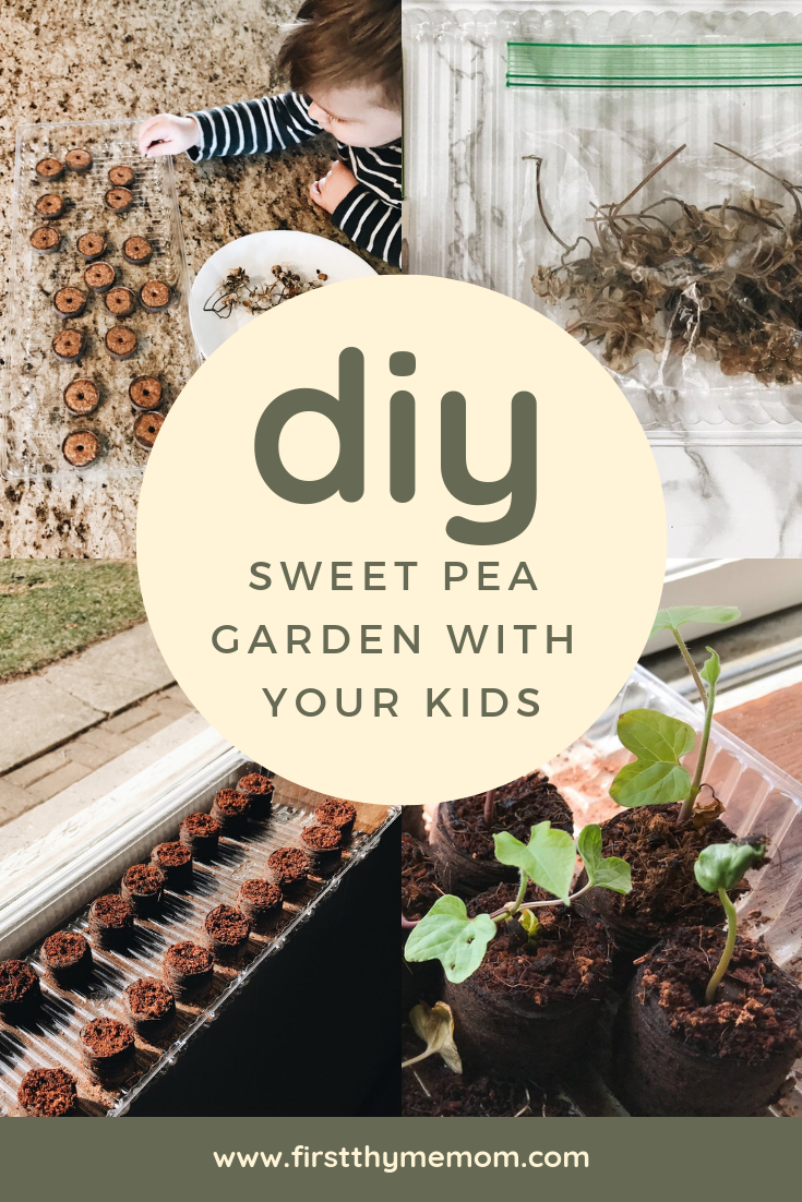 How To Start A Sweet Pea Garden With Your Kids. Activities for kids. Gardens with kids. Kid craft ideas. Fun activities with toddlers. Toddler crafts. DIY Sweet Pea Garden. Easy garden ideas for kids. #kid #craft #ideas