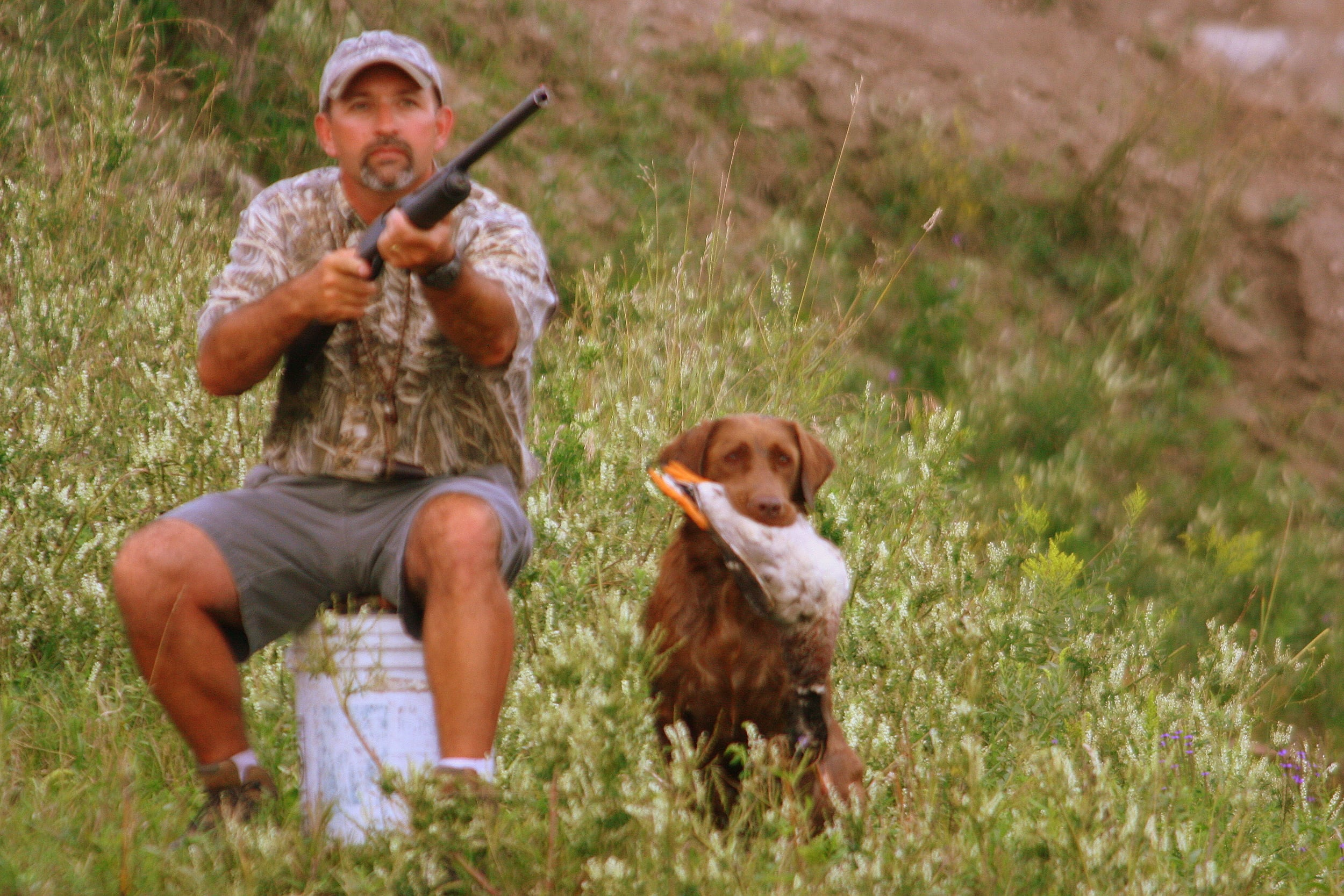 Wade and Tiger, a chocolate labrador retriever, watch a bird fall during a training session.