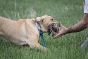 First class professional gun dog training