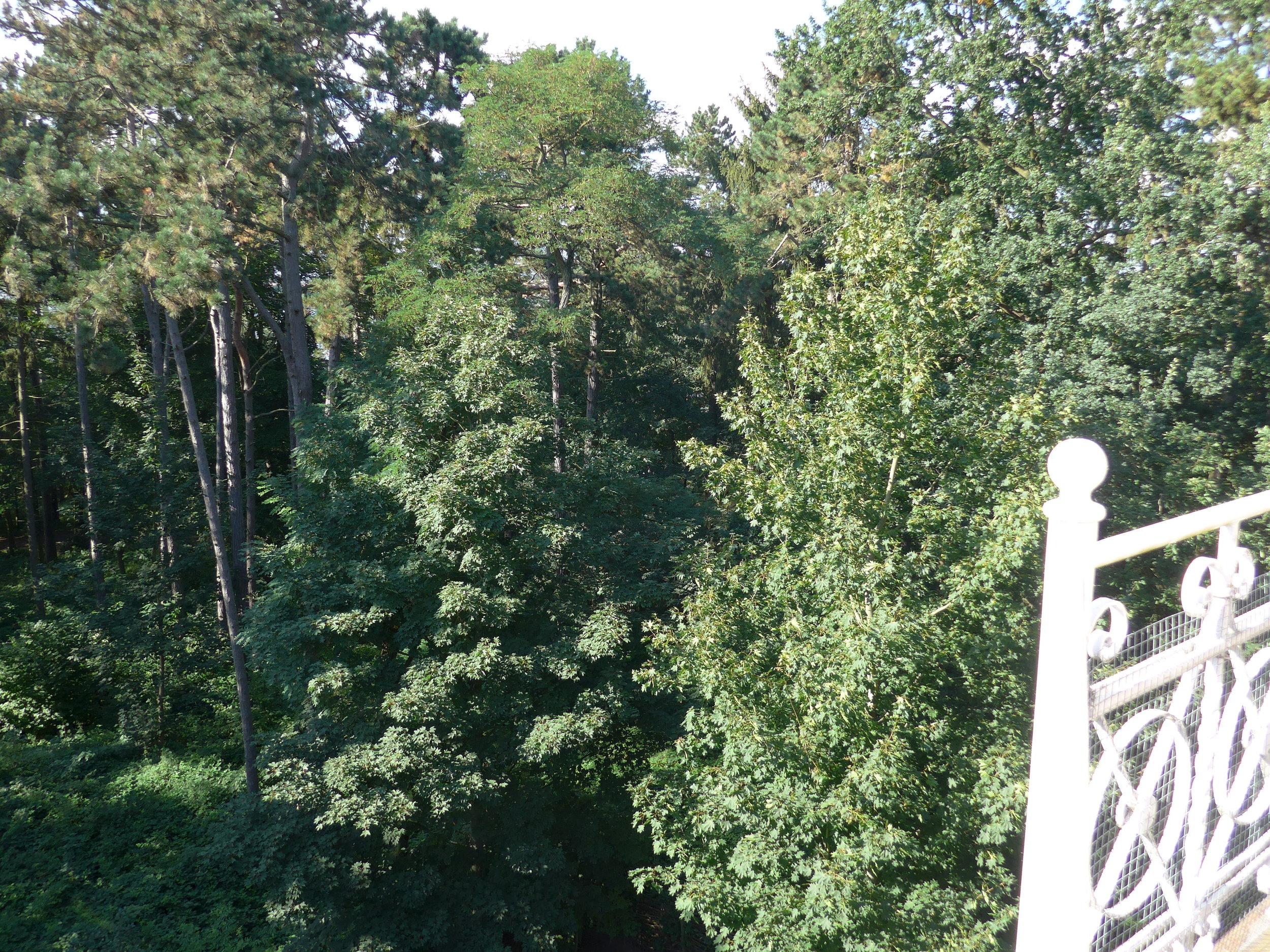 Blick in Baumkronen_2_©BEWAHREN Ferienhaus eG P1020162.jpg