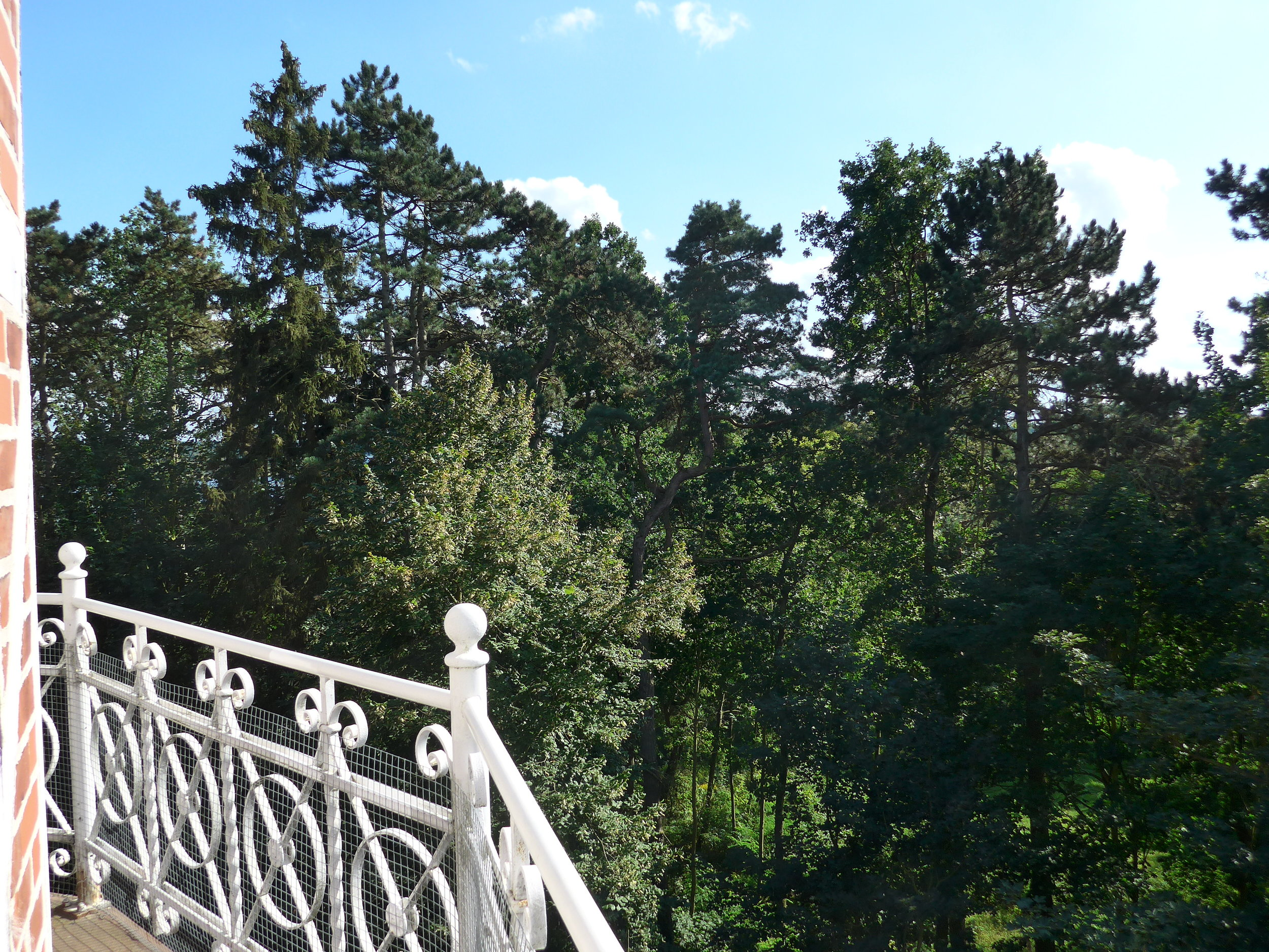 Blick in Baumkronen_3_©BEWAHREN Ferienhaus eG P1020165.jpg