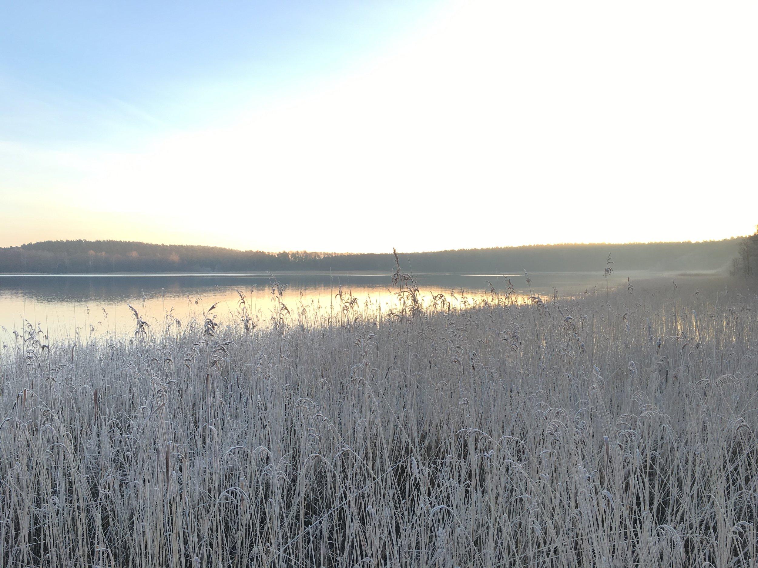 Winter_6 Schilf_©BEWAHREN Ferienhaus eG IMG_9984.JPG