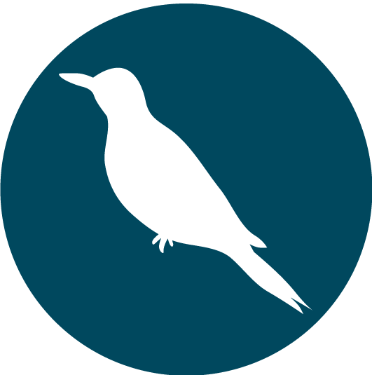 Northern-Flicker-Bird.png