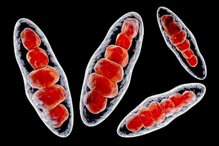 ringworm.jpg