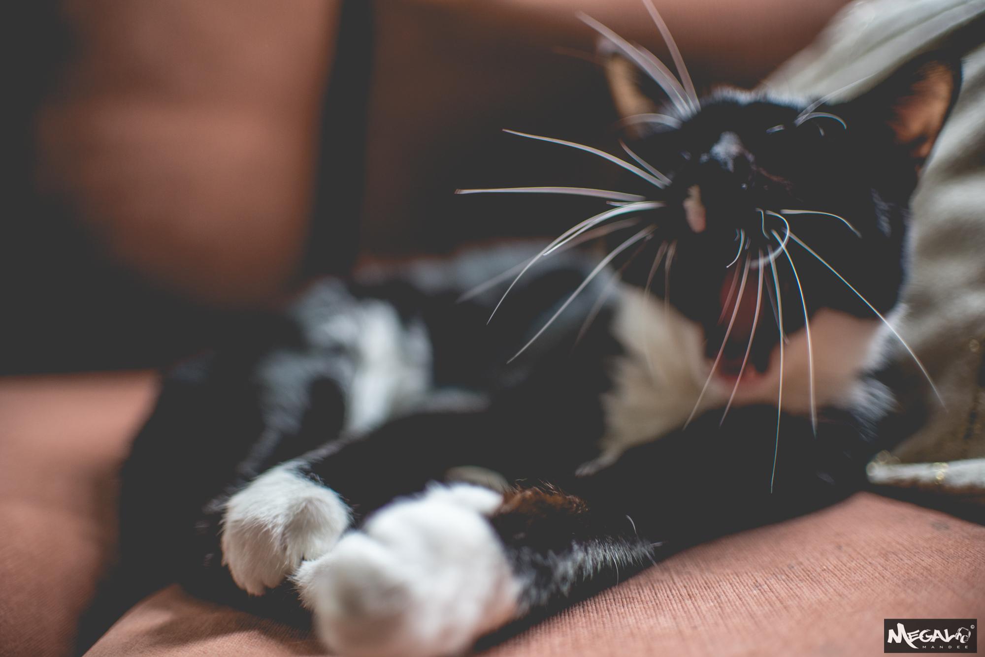 Cats-7367.jpg