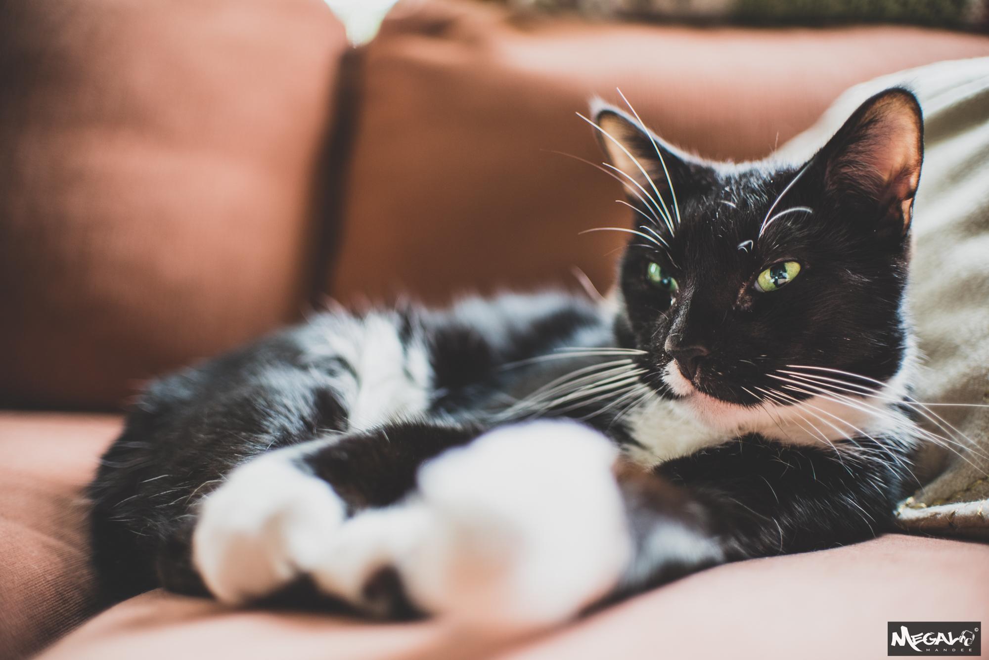 Cats-7374.jpg
