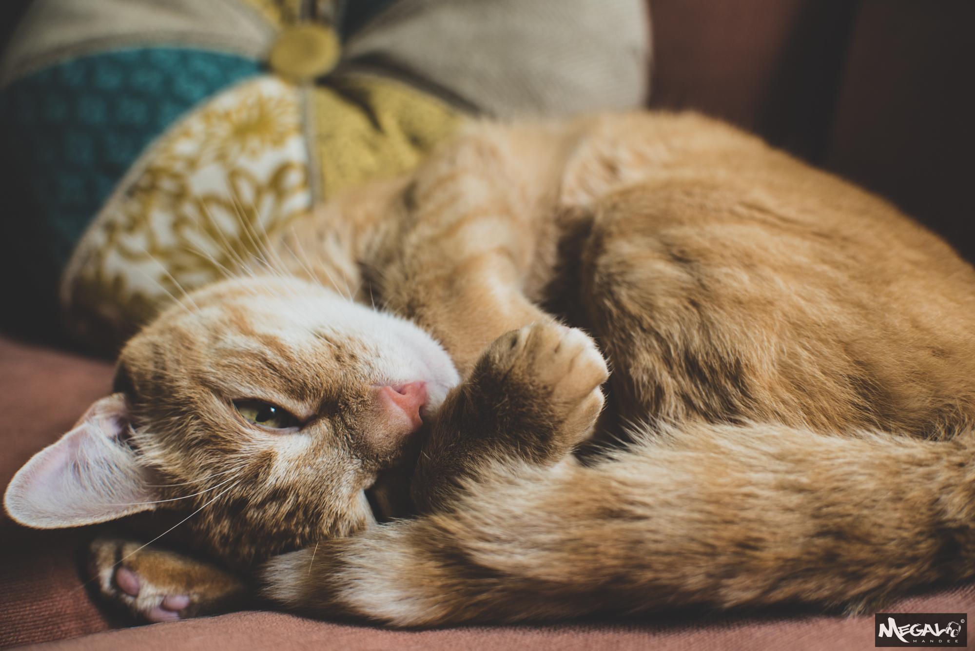 Cats-7399.jpg