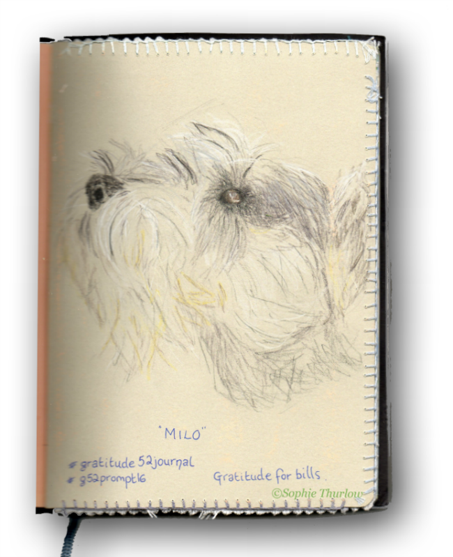 gratitude journal - sophie thurlow