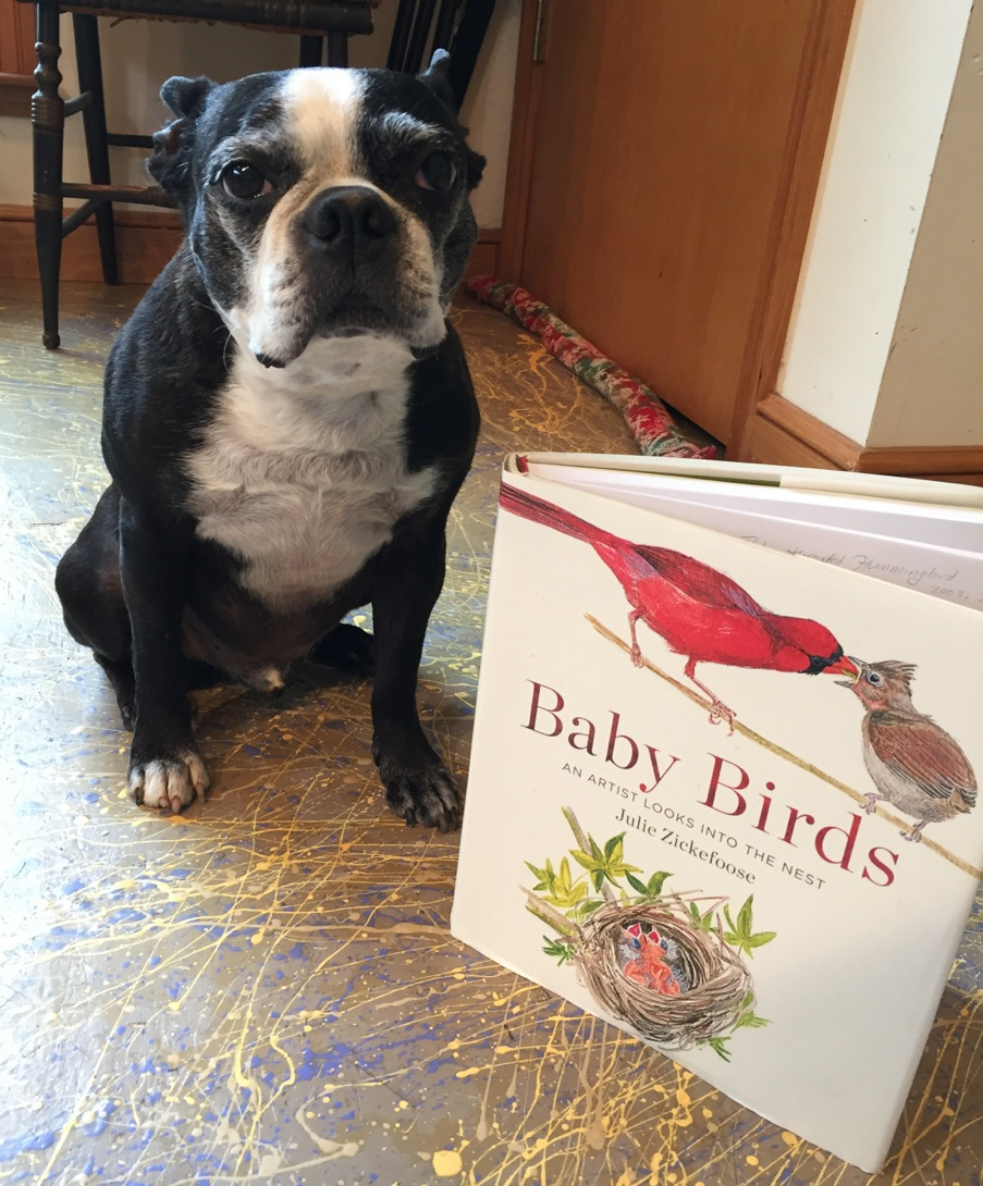 "Chet Baker and Julie's forthcoming book, ""Baby Birds,"" coming out in April! Photo courtesy of Julie Zickefoose."