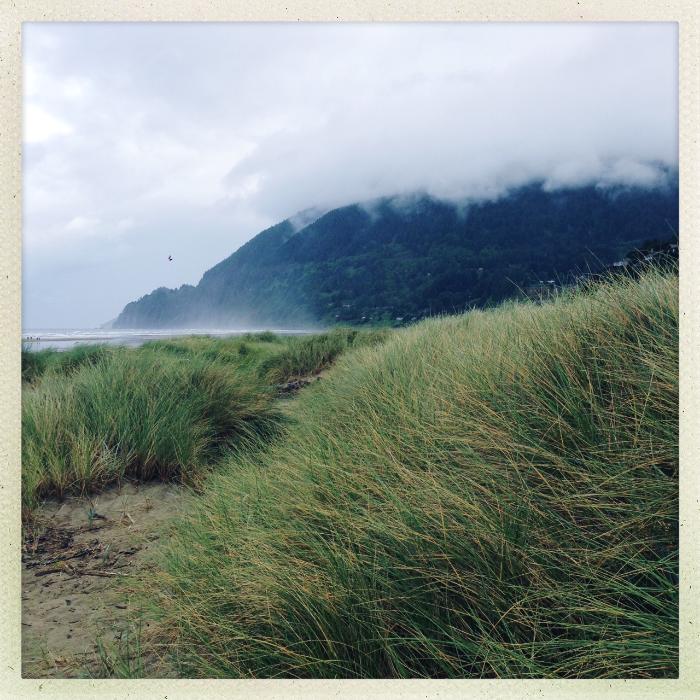 Glorious dunes and sea grass along Manzanita beach.