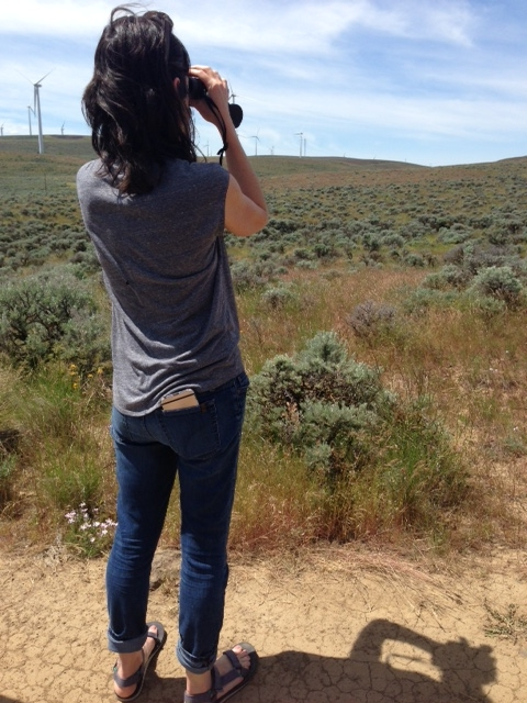 Cambria looking for Sagebrush Sparrows at Quilomene Wildlife Area.