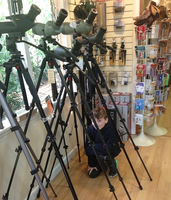 Hiding among scopes at the Seattle Audubon Nature Shop.