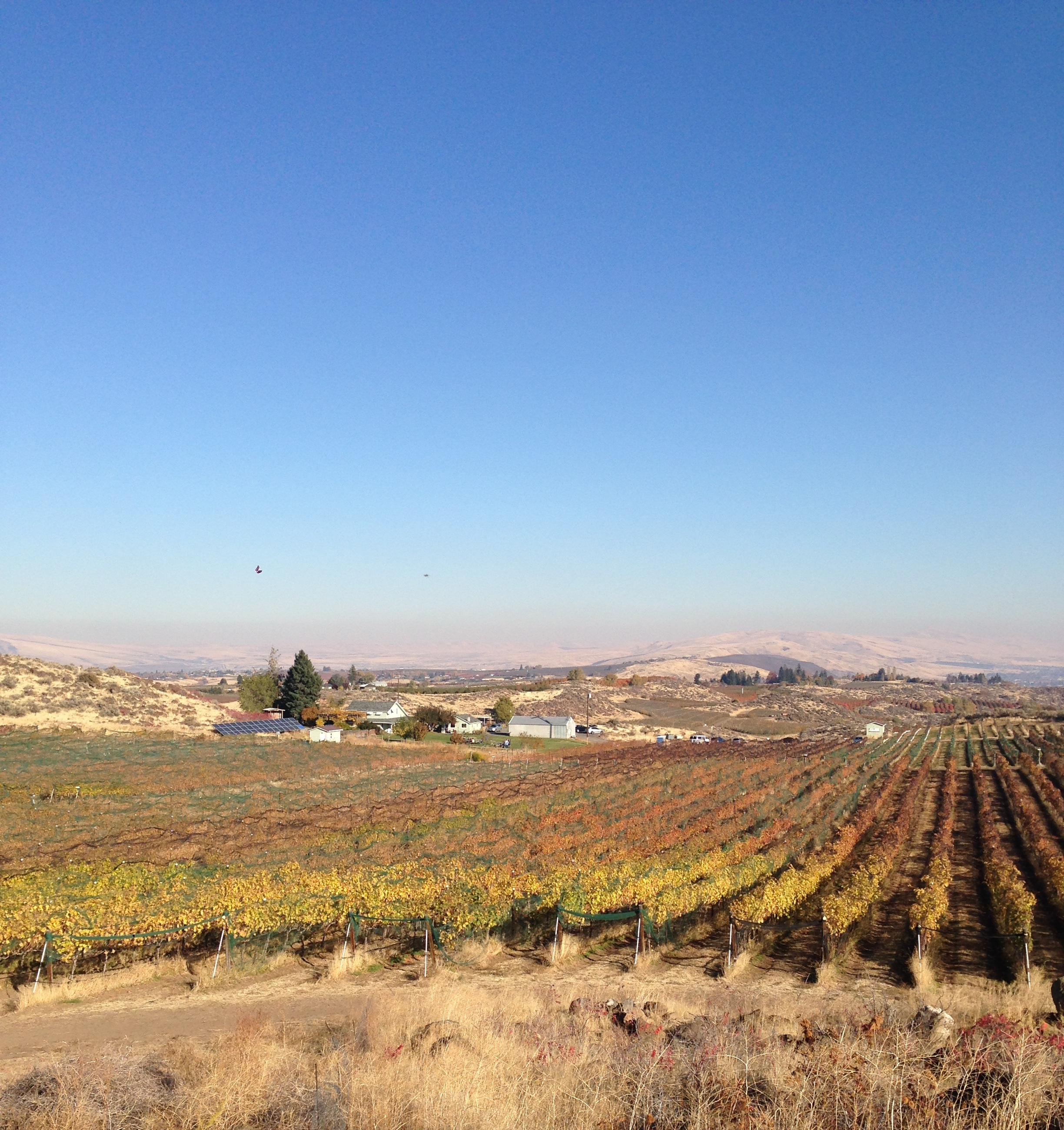 View of the vineyards.