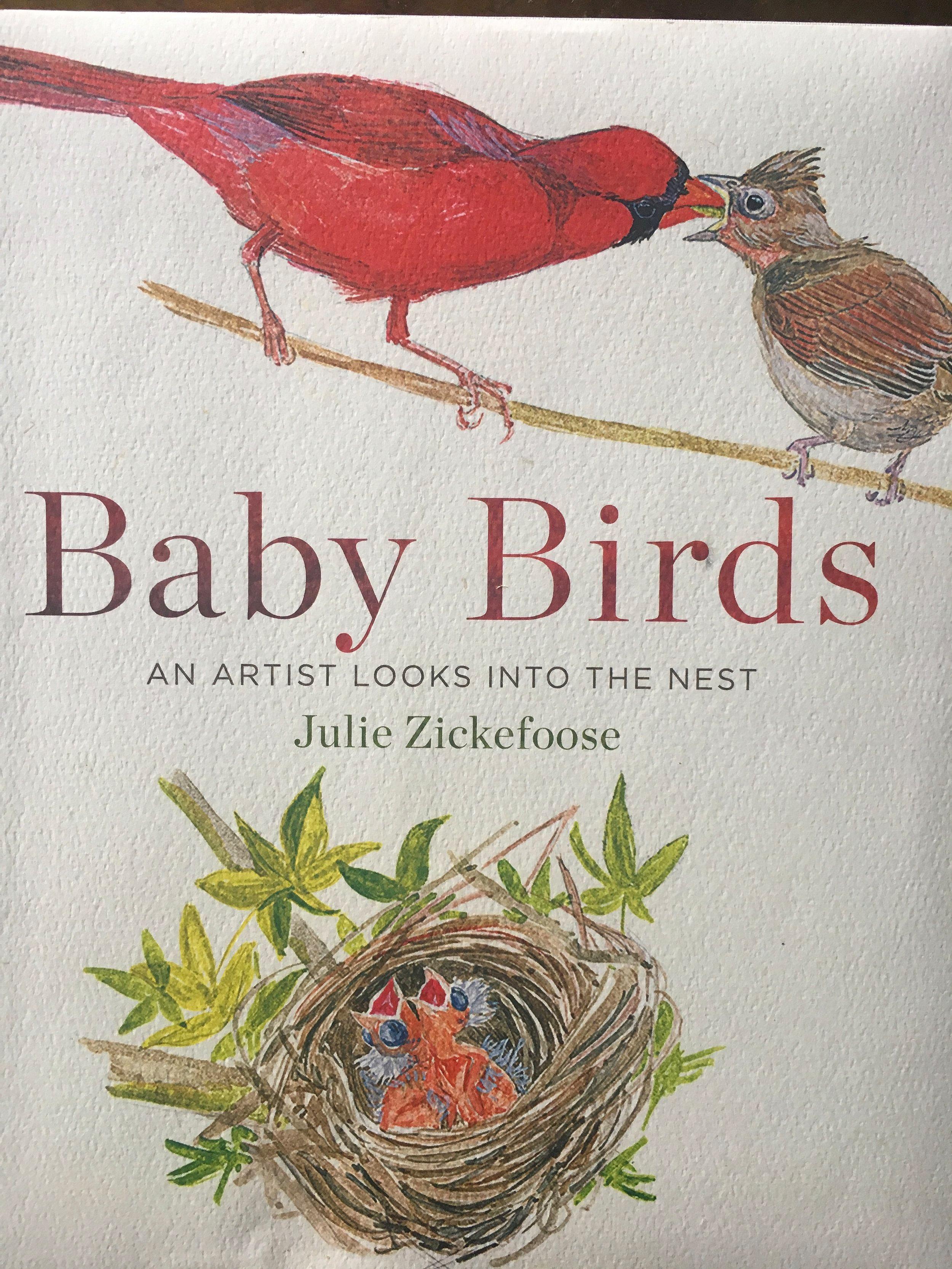 Baby+Birds.jpg