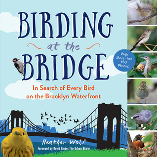 Birding at the Bridge by Heather Wolf.jpg