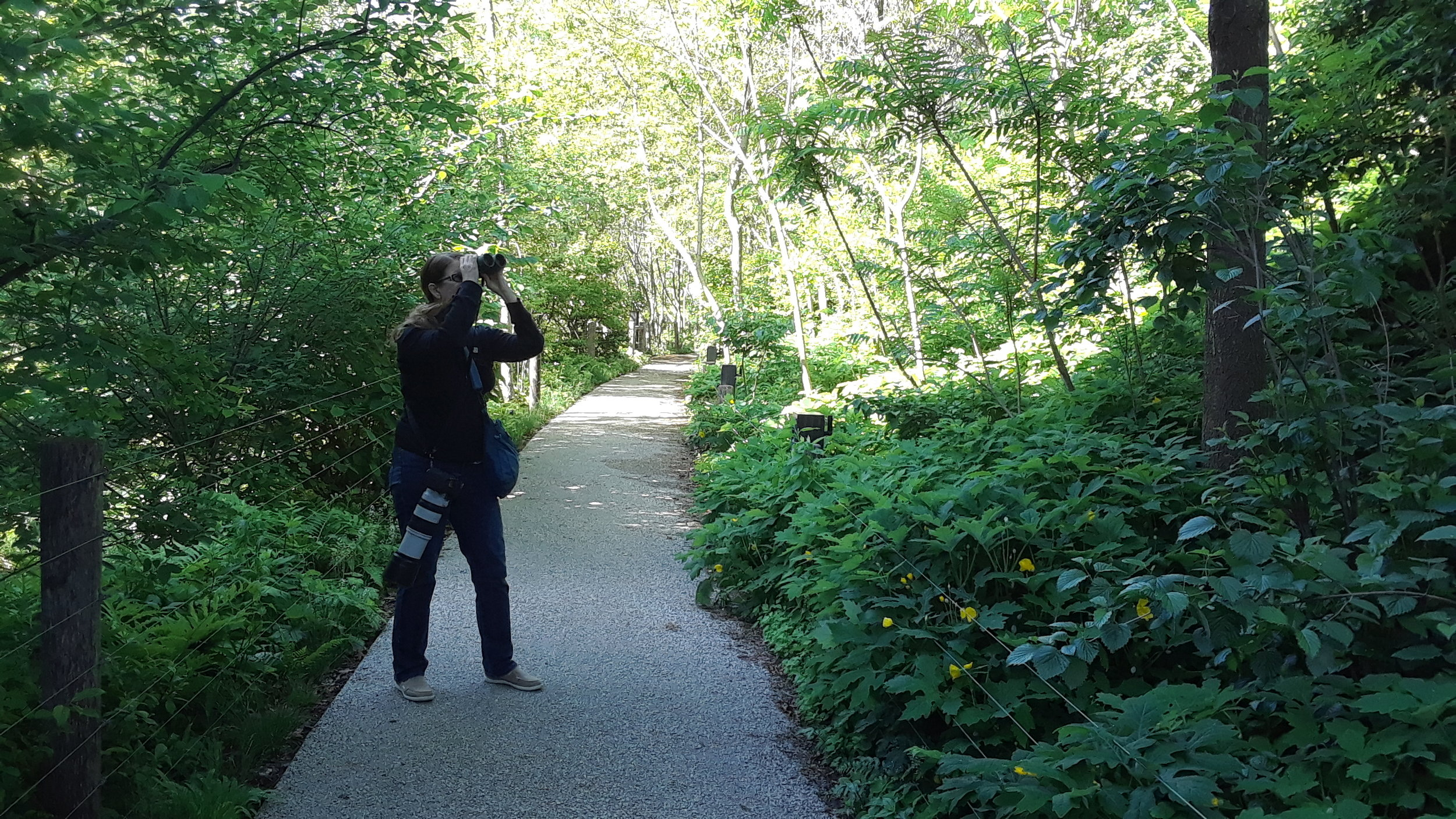 Wolf birding (camera at the ready!) in Brooklyn Bridge Park.