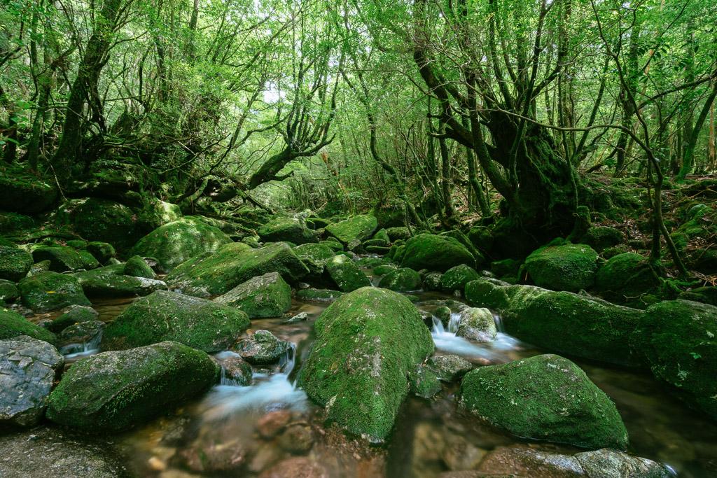 Yakushima Travel Guide -