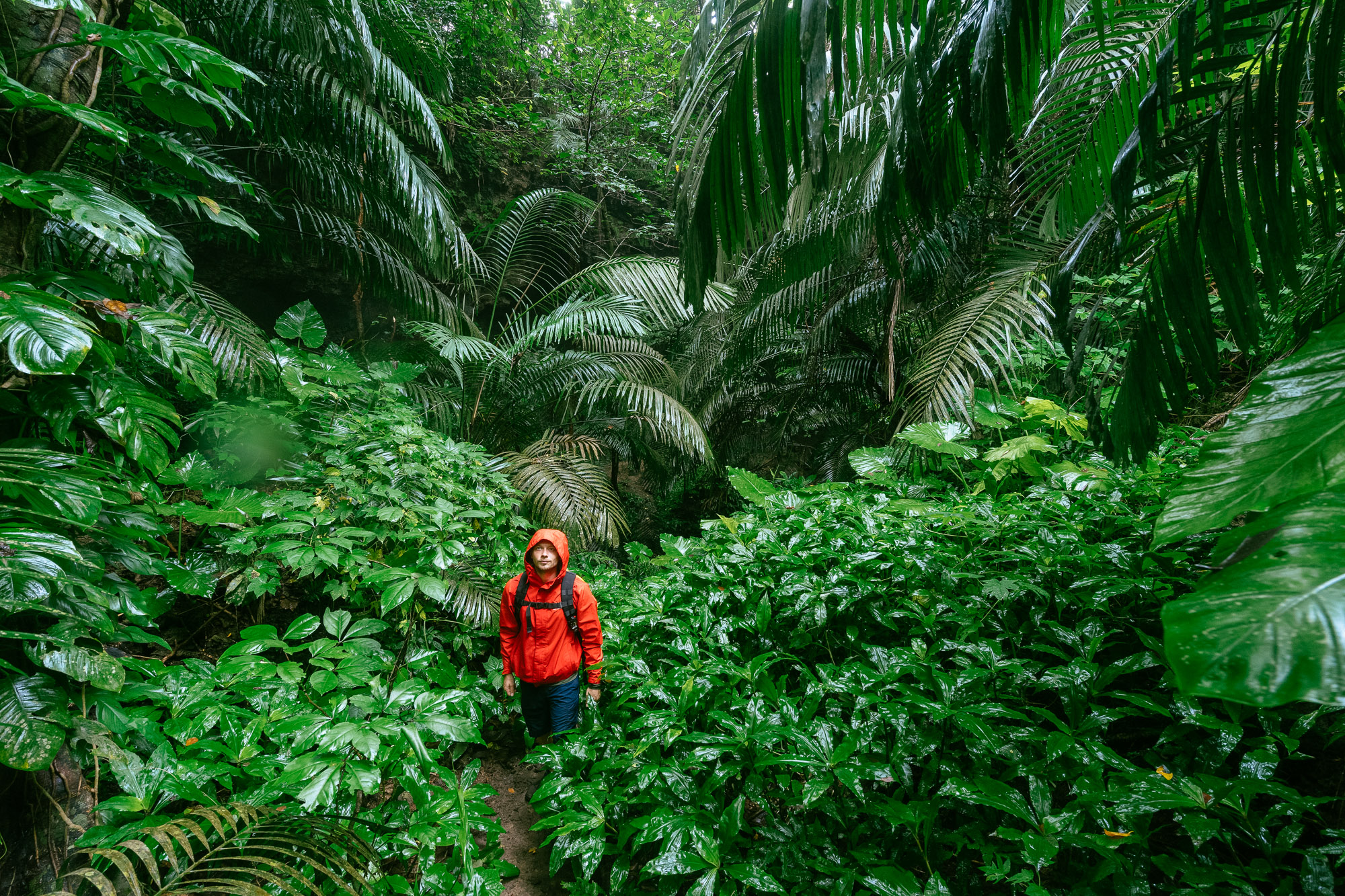 The rain brings out the lush greens of Iriomote Island