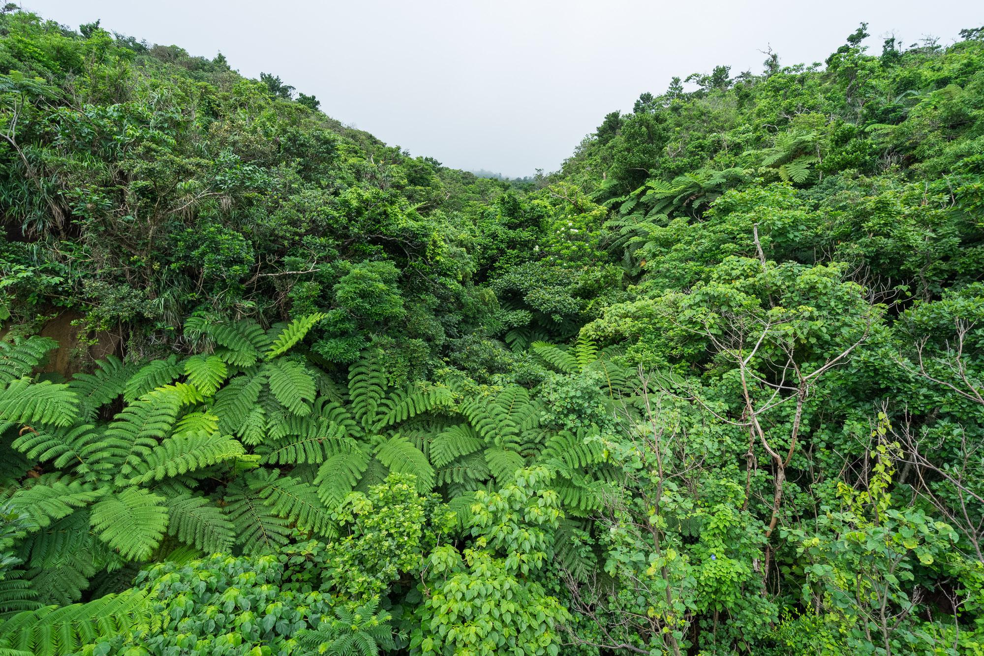 Lush Jungle Scenery