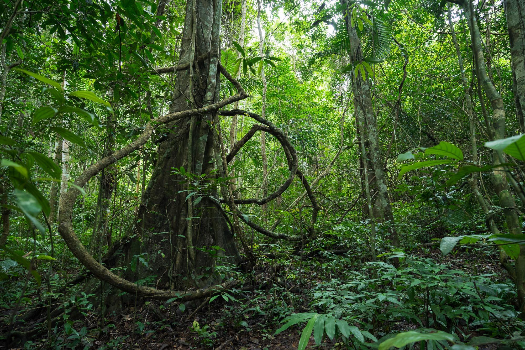Khao Yai National Park Scenery, Thailand