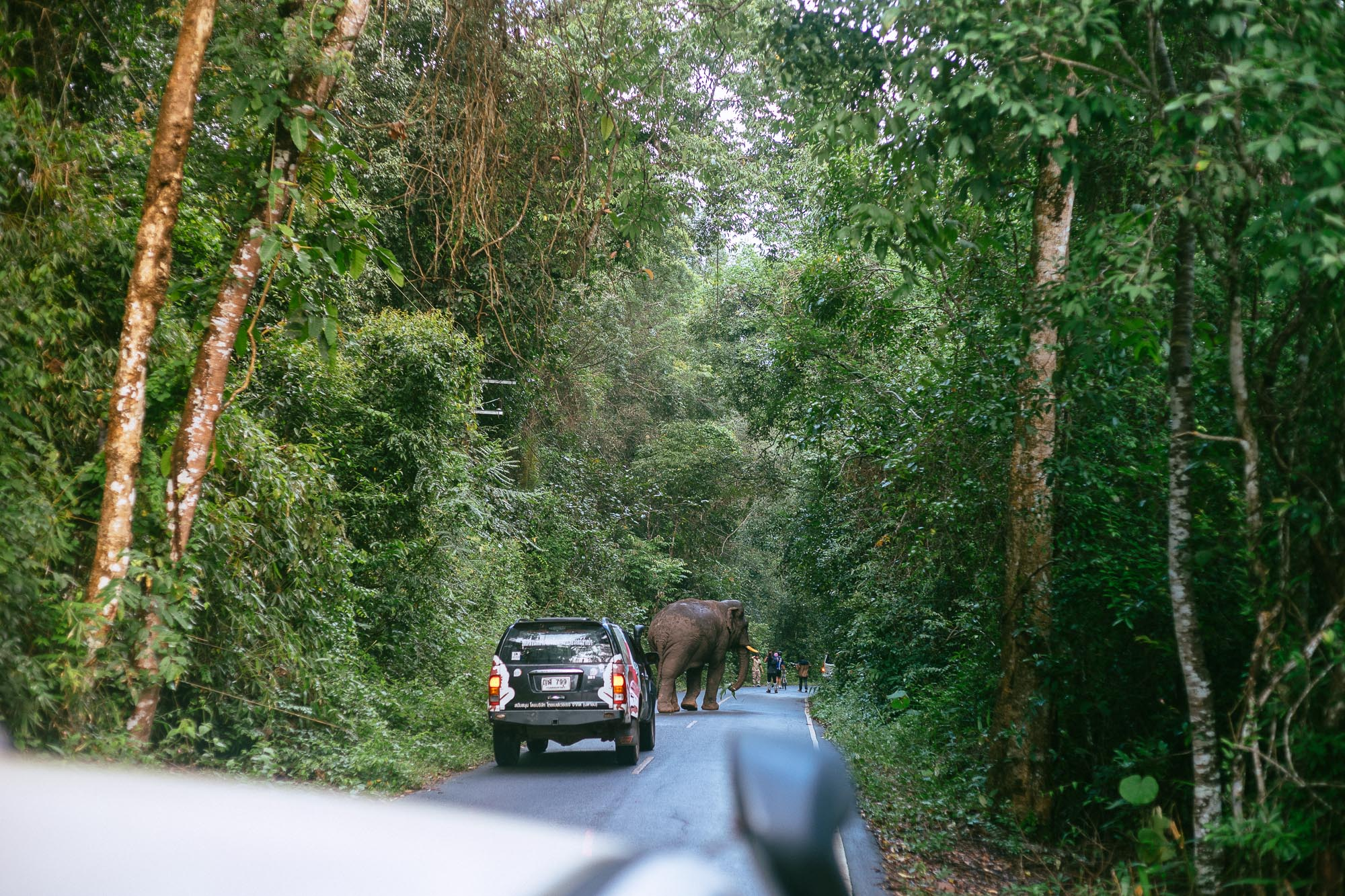 Elephant Crossing, Khao Yai