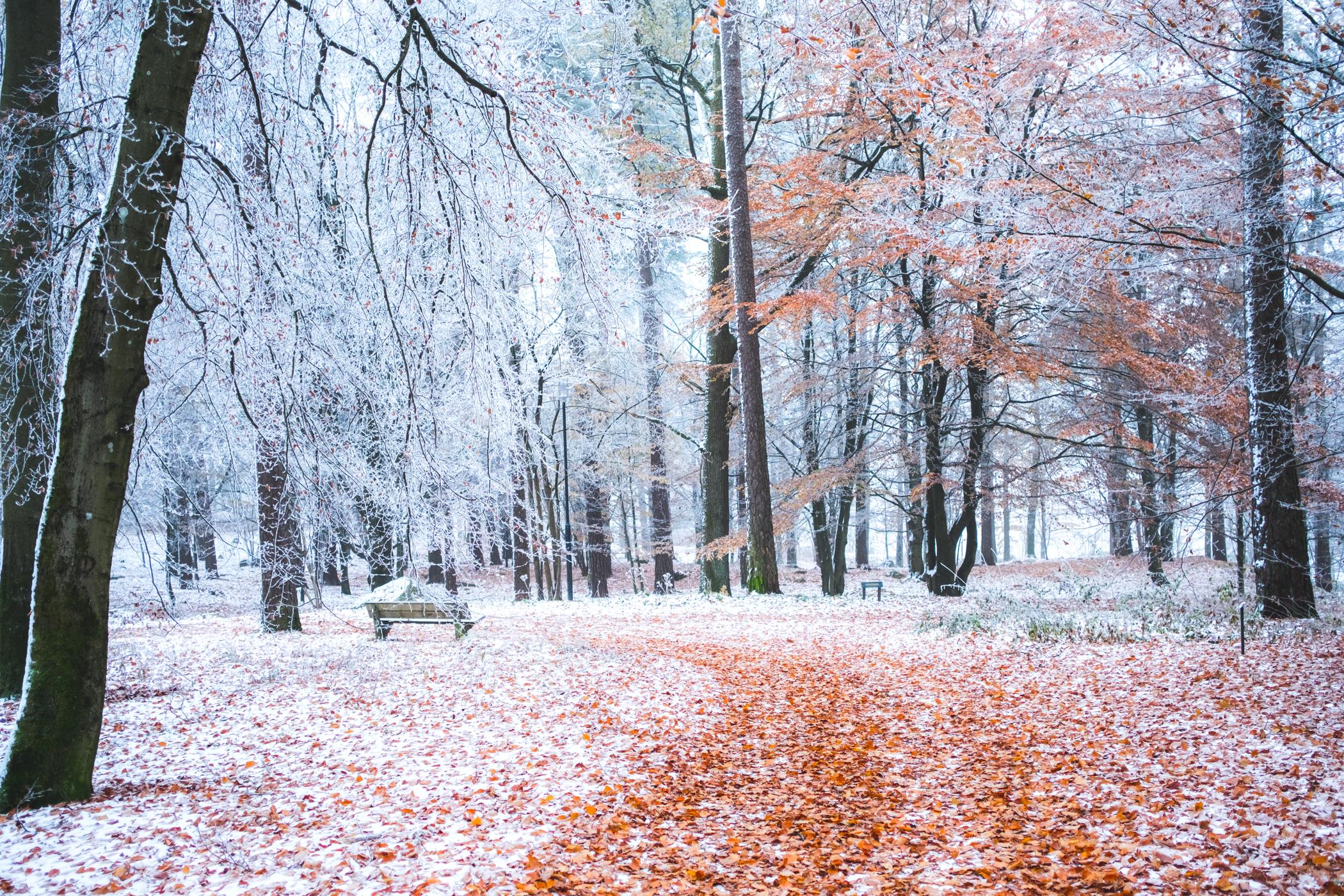 Naturfoto_Annelundsparken_max-norin-3-Redigera.jpg