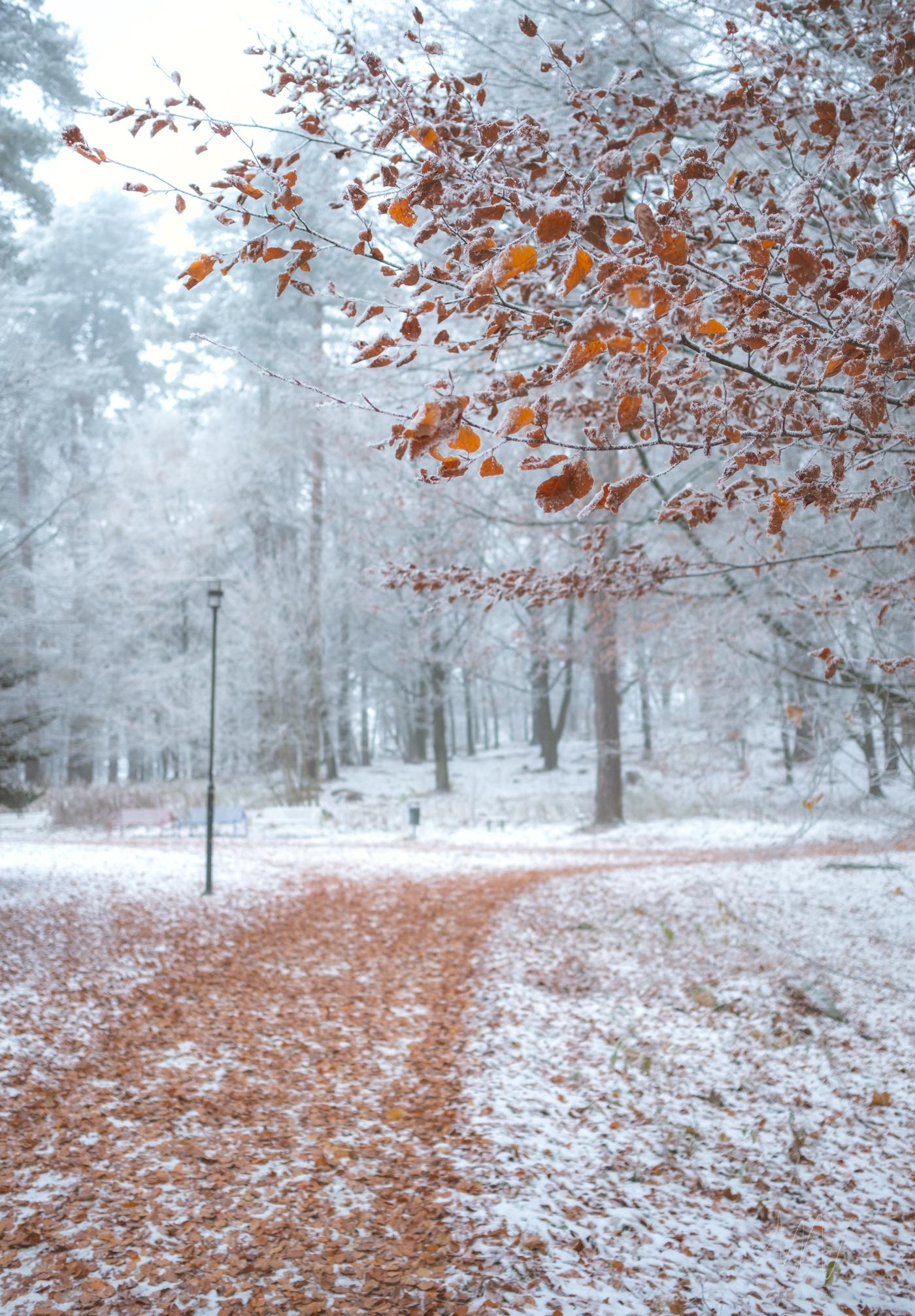 Naturfoto_Annelundsparken_max-norin-6-Redigera.jpg