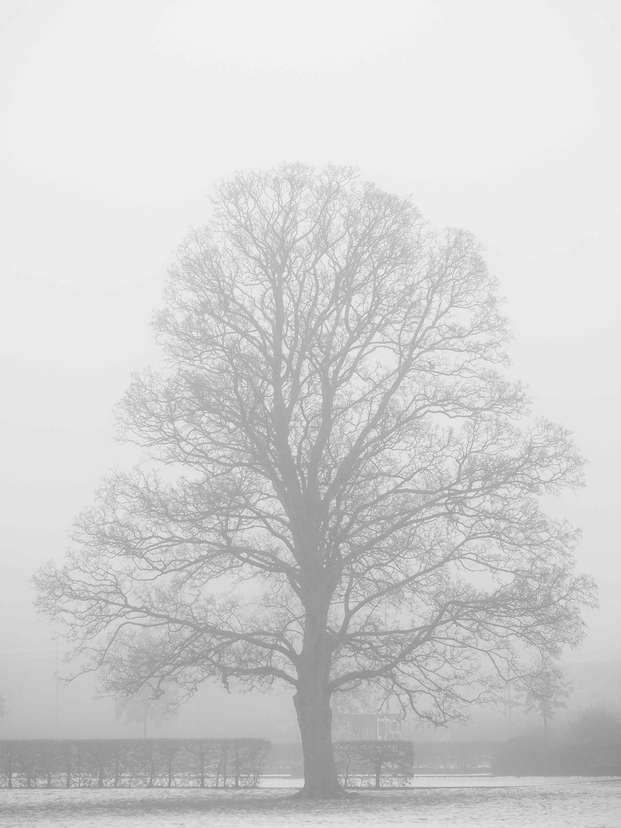 Winterfog-7274.jpg