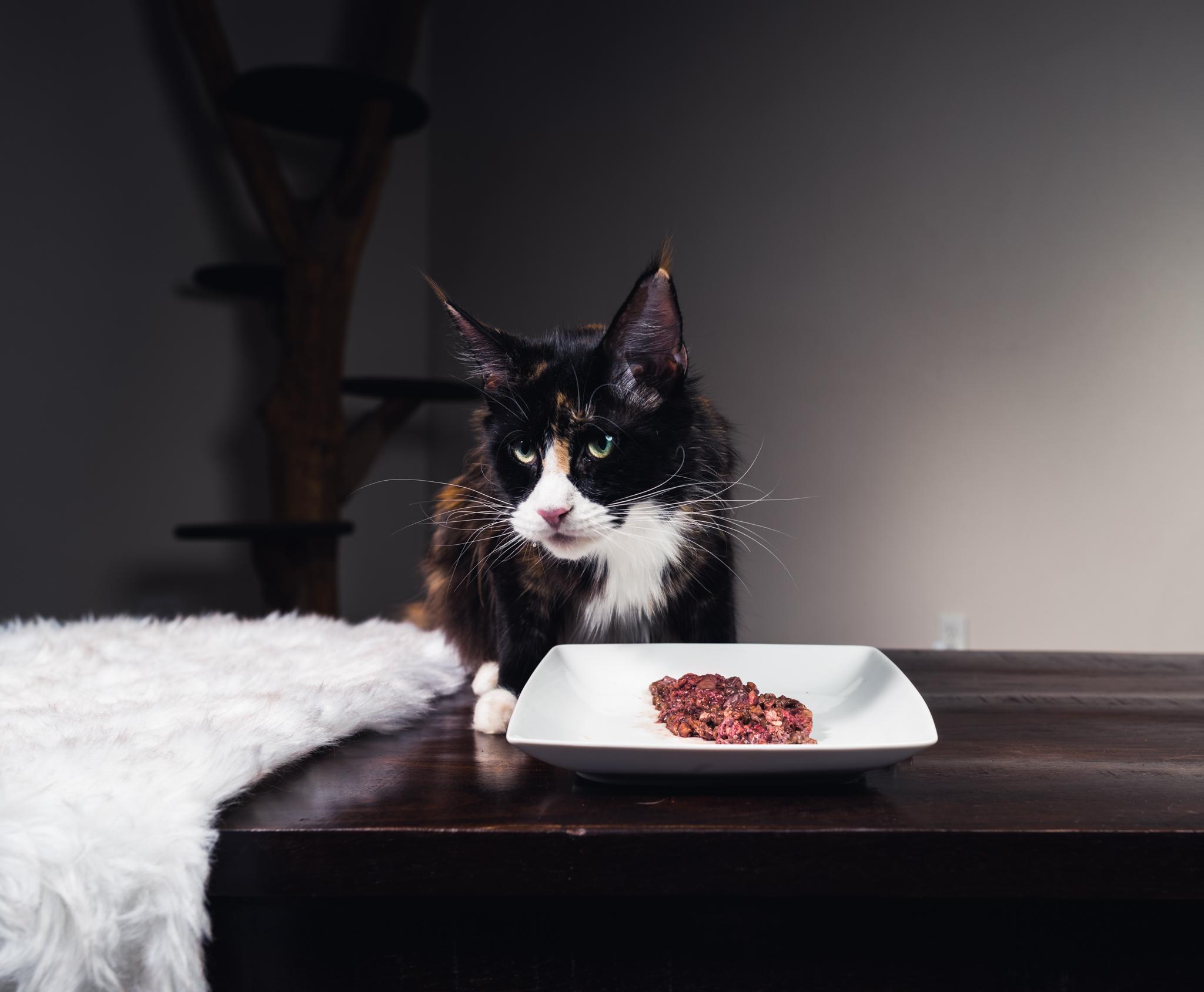 Beef_lung_cats_2048_12.JPG