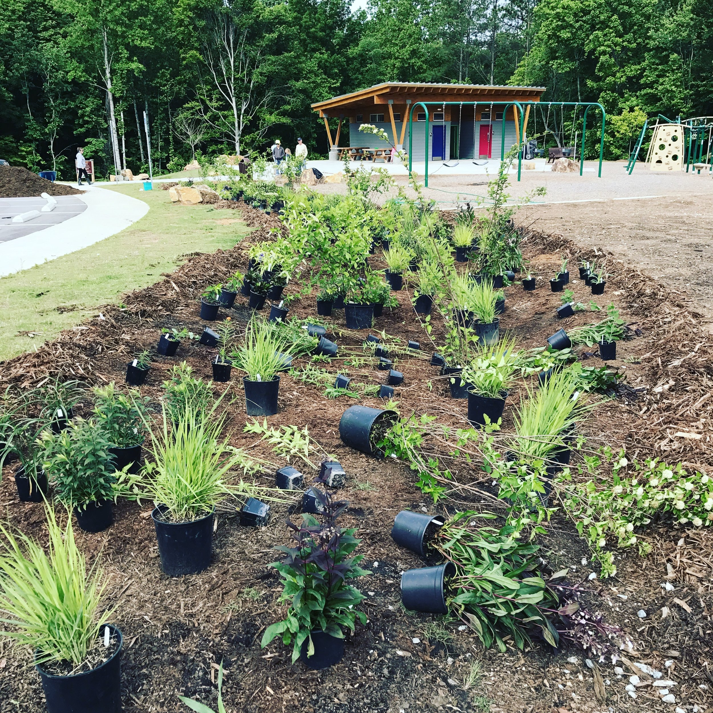 A former drainage channel filled with rip rap becomes a native pollinator garden designed to enhance the public's awareness of Hillsborough's Bee City USA initiative