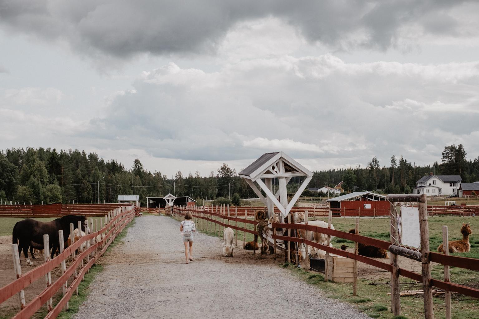 matildas tillvaro mickelbo gård-13452.jpg