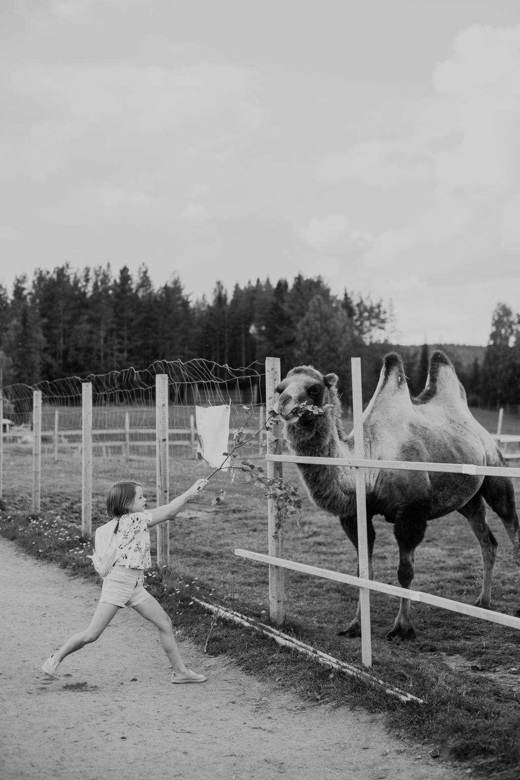 matildas tillvaro mickelbo gård-13344.jpg
