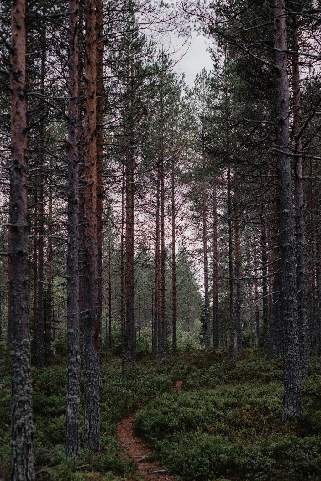 matildas tillvaro fotograf umeå-26036.jpg