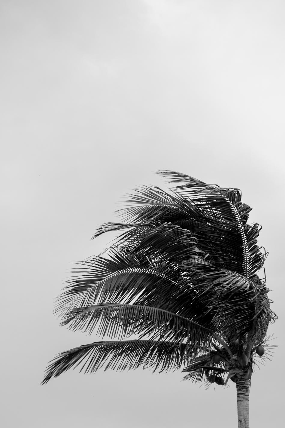 Cancun-02.2017-2.jpg