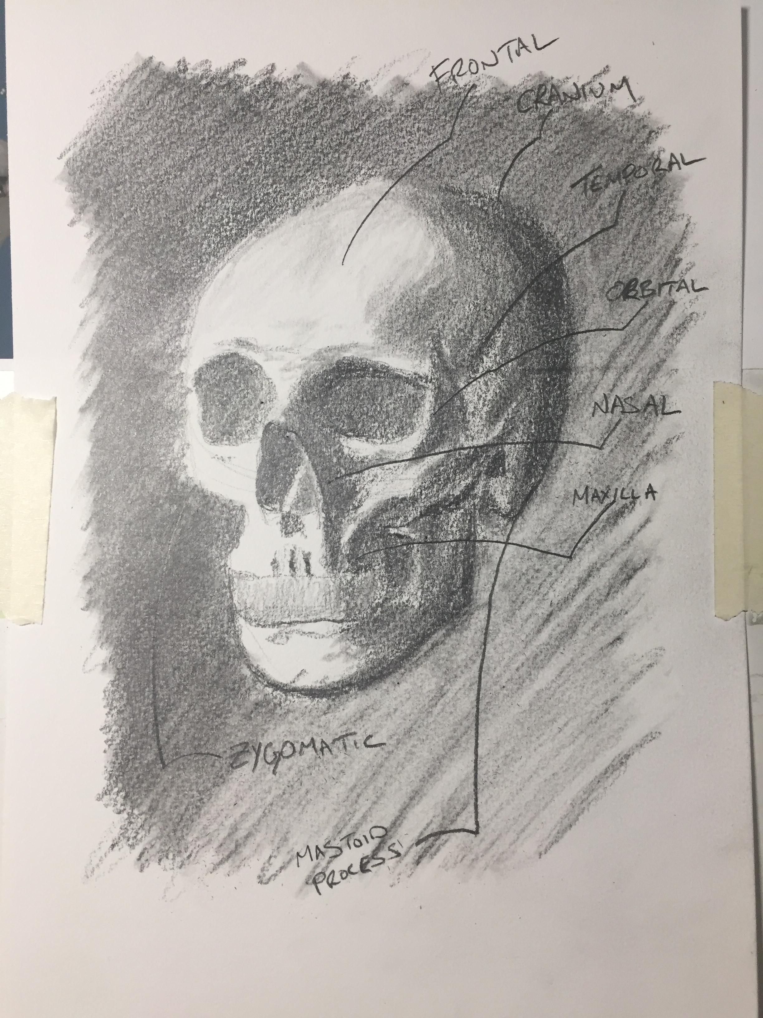 Anatomy - Skull - December 15, 2016