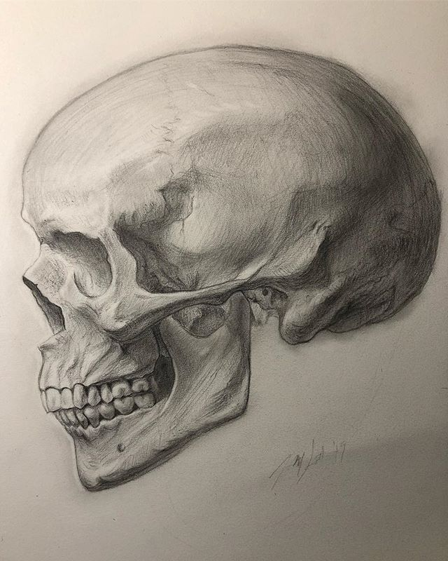 A longer skull drawing, probably 3-4 hours total. The product of some lessons on modeling the skull. Some proportion issues but overall I'm happy with it. If my shoulder wasn't getting sore I'd work it more. I want to do 9 more angles of this. I think that would benefit me greatly. Col-erase on drawing paper. . . . . . #drawing #skull #skulldrawing #practice #drawingtutorialsonline #colerase #pencil #pencildrawing #modeling #form #skeleton #anatomy #skullprofile #instaart #instaartist #art #artwok #anatomyart #drawinganatomyandart