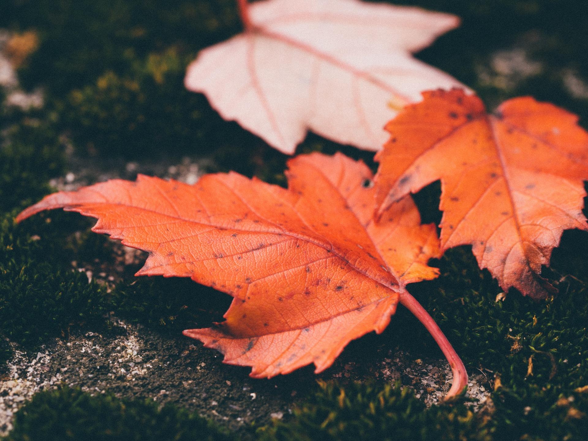 leaves-1030816_1920.jpg