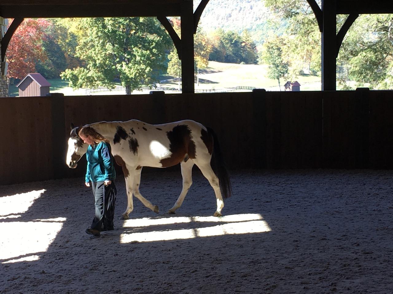horsecoaching