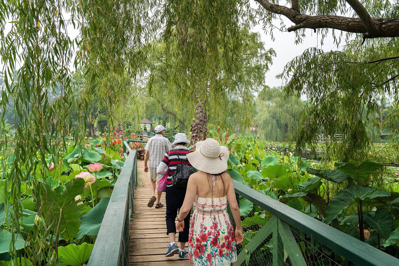 Blue Lotus Water Garden in Yarra Valley, Victoria, Australia