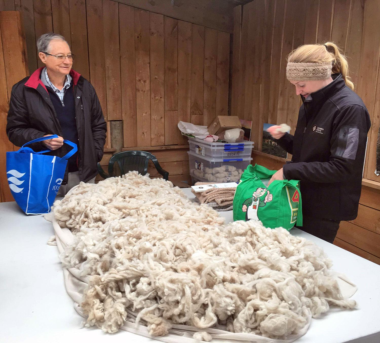 Tour Introduction at Shamarra Alpaca Farm in Akaroa, New Zealand